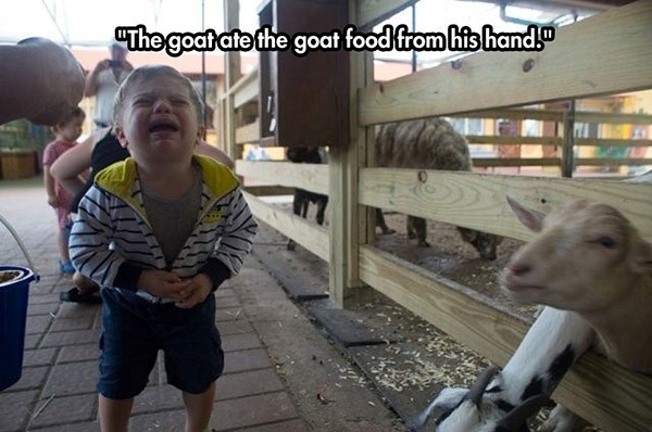 goat-toddler